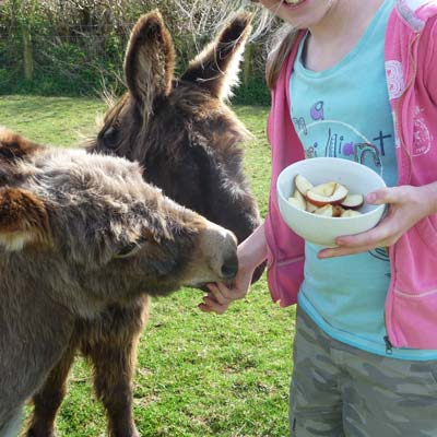 our donkeys - farm cottages devon