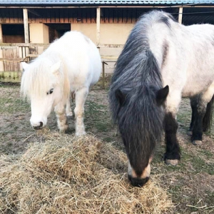 Pebbles and Amber our ponies